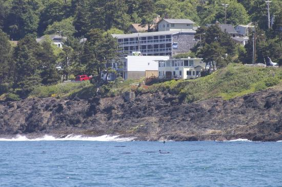 "An Ocean Paradise Whales Rendezvous B&B: View of our ""home"" from out on the water! It is the small yellow house on the right."