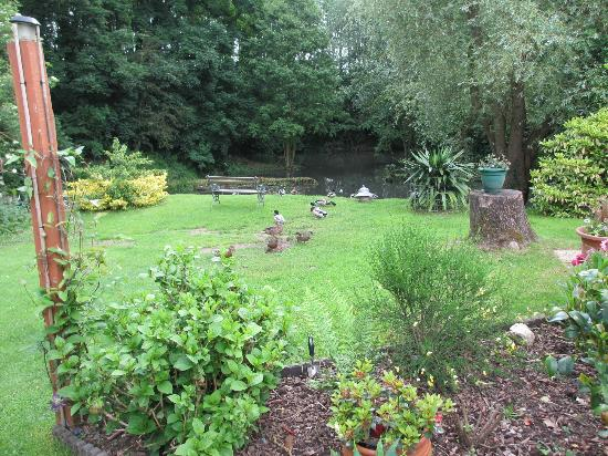 Marl Cottage Bed and Breakfast: View of pond