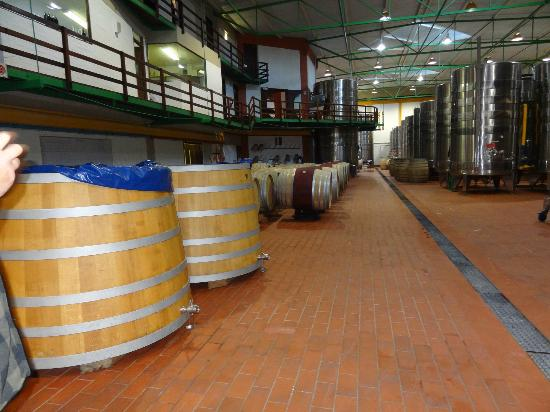 Greatest Africa Private Wine Day Tours: processing