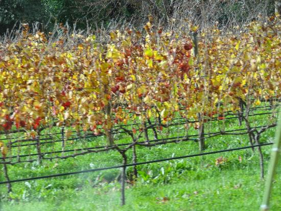 Greatest Africa Private Wine Day Tours: vines ...