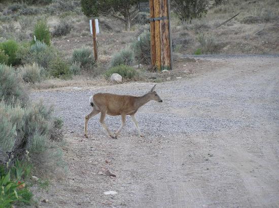 Bullion Creekside Retreat: Backyard visitor