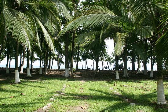 El Coquito: The grounds walking toward the beach 