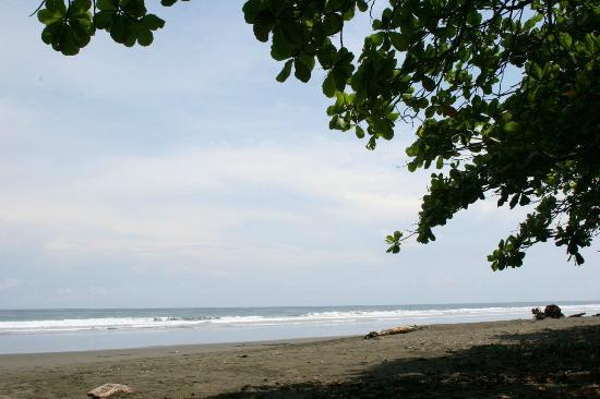 El Coquito: More Beach views 