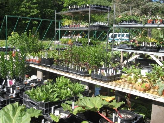 Sustainable Dream Greenhouses : many varieties