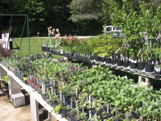Sustainable Dream Greenhouses : beautiful day to shop