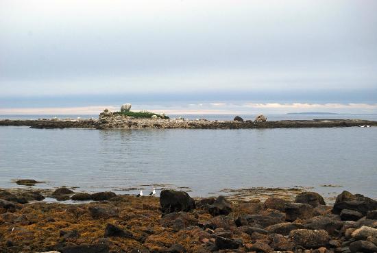 Oceanstone Resort: glacial erratic