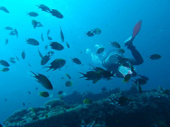 Amed Scuba Tauchzentrum: Plenty of beautiful fish
