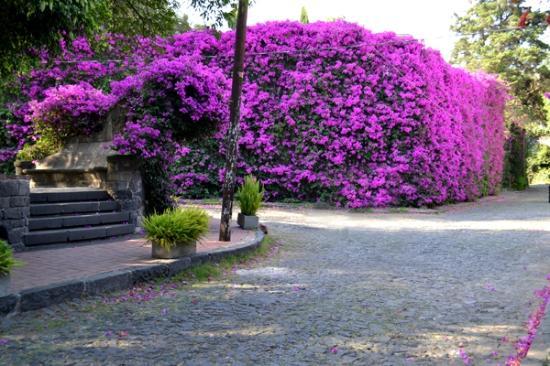 Mexico City, Mexico: Plaza de los Arcangeles