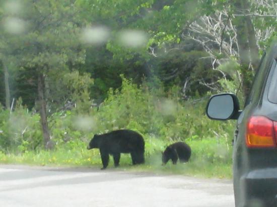 Cameron Lake: black bear & cub