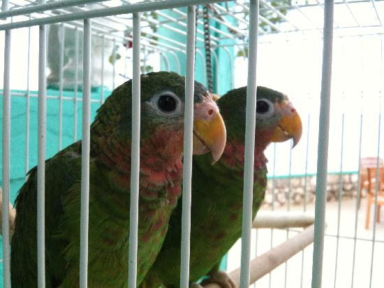 Xtabi Resort: The parrots at the bar