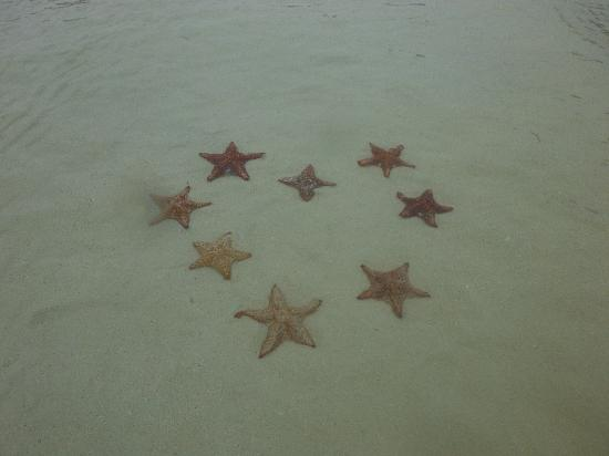 Star Fish Point: heart