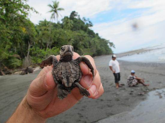 Rancho Burica: releasing the turtles