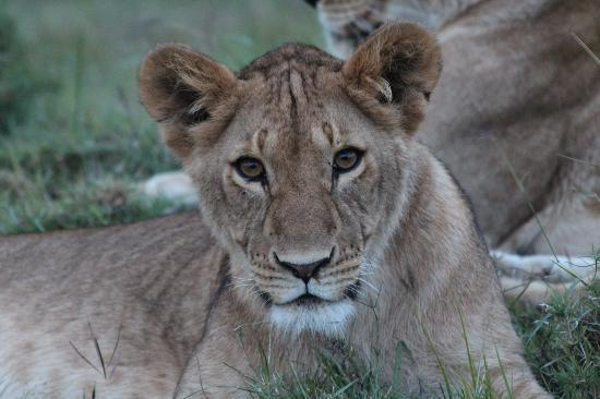 Richard's Forest Camp: Up close and personal with the lions