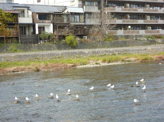 Hotel Sunroute Kyoto: The river behind hotel to feed birds