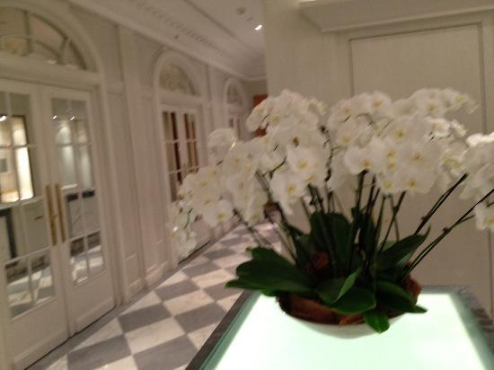 Baur au Lac: White orchids are everwhere