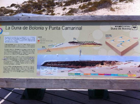 Playa de Bolonia : Panel sobre la duna
