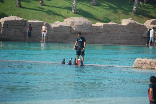 Atlantis, The Palm: the dolphin bay