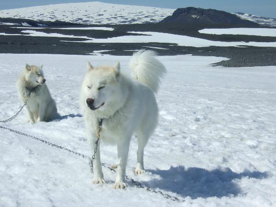 Eskimos - Day Tours: dog sledding!