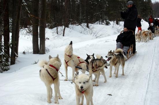 Expedition Mi-Loup Dog Sledding: Dog Sledding