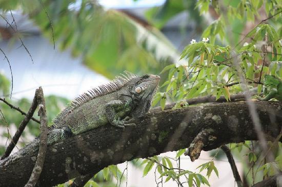 La Fuente del Amazonas Lodge : Leguan