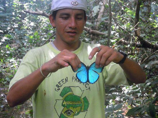 La Fuente del Amazonas Lodge : mariposo