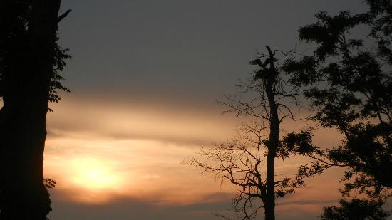 Black Walnut Point Inn: Local osprey coming home on the property at sunset 