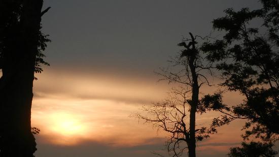 بلاك وولنت بوينت إن: Local osprey coming home on the property at sunset 