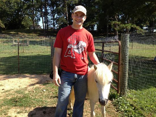 Cornerstone Farm: Pony 