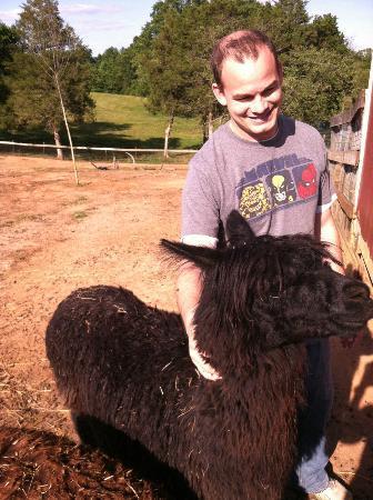 Cornerstone Farm: Alpaca