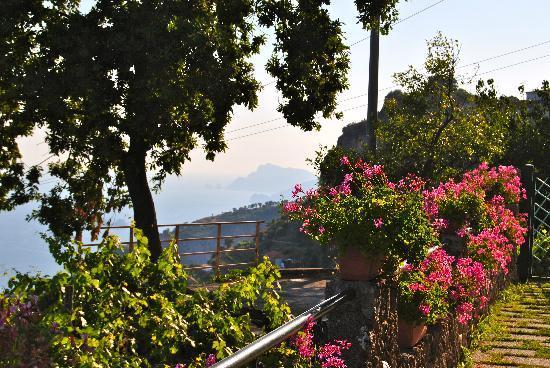Residence Eden: Giardino con vista su Capri