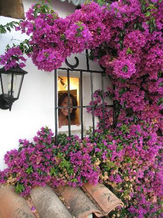 Le Hameau : Looking out bathroom window.