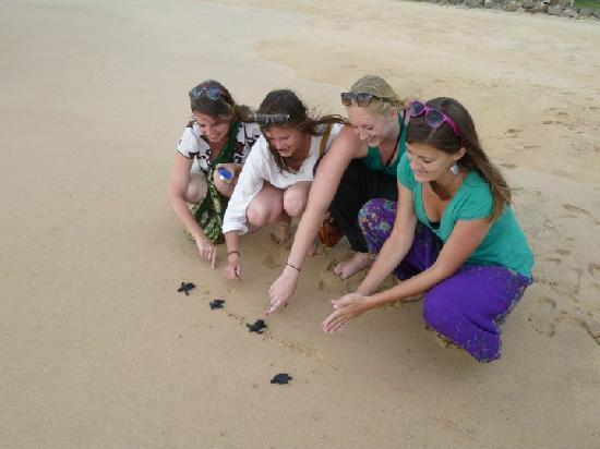 Χικαντούγα, Σρι Λάνκα: Schildpadden vrij laten