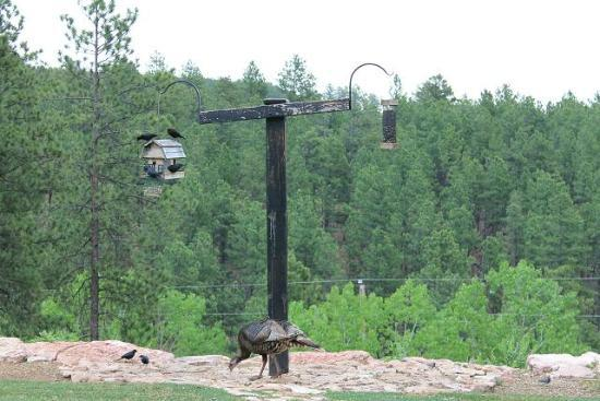 Peregrine Pointe Bed and Breakfast: Wild Turkey hoovering up food dropped by birds!