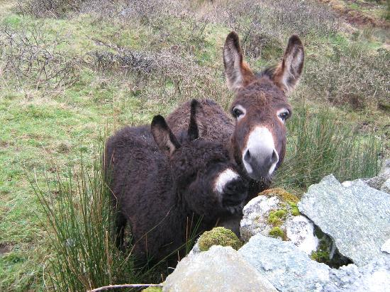 Wits End B & B: Donkeys in Connemara