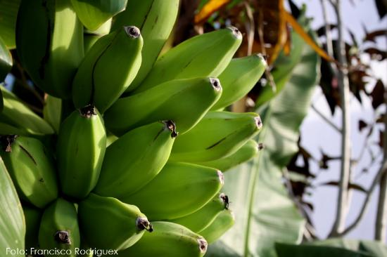 Great Escape: Bananas, yes.. there is plenty of those there..  yummy