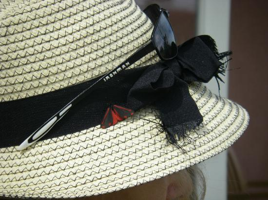 Little Vienna Bakery Cafe & Marketplace: the red and black butterfly on my hat