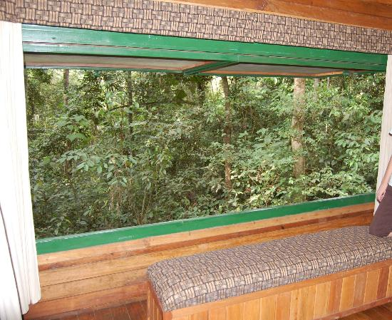 The RainForest Lodge: View from Room Window - opens to rain forest!