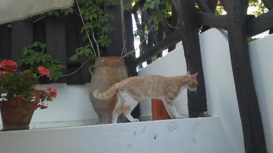 Chateau Zevgoli: petit chat qui se ballade sur notre balcon