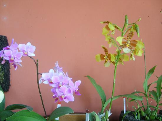 Casa D'Acuna: Colección de orquídeas
