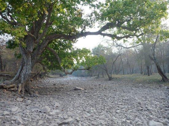 Ranthambore National Park: Ranthambore