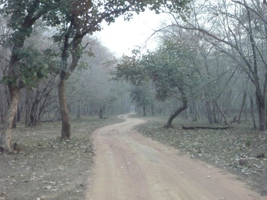 Ranthambore National Park 사진