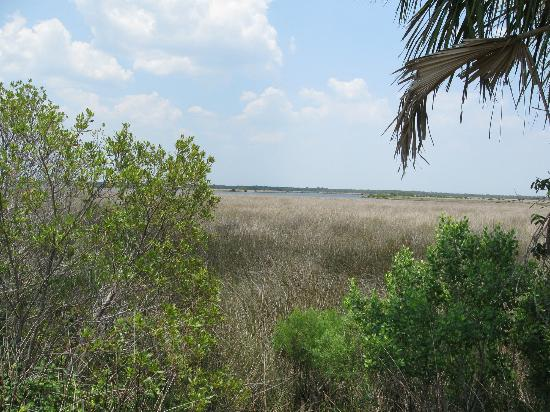 ‪‪Fort Island Gulf Beach‬: part of a marsh land