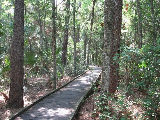 Fort Island Gulf Beach: trail going to the board walk