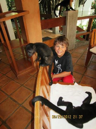 Hotel Capitan Suizo: Monkeys at