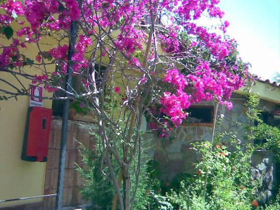 Hotel Village Tabu': fiori ovunque