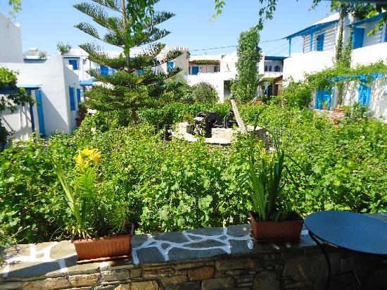 Agios Prokopios Hotel: The Vinyard outside our room 
