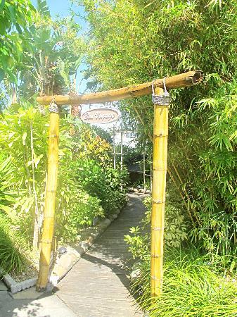 Delacado on Treasure Island: landscaping