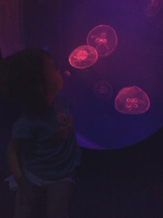 Virginia Aquarium & Marine Science Center: Beautiful jellyfish
