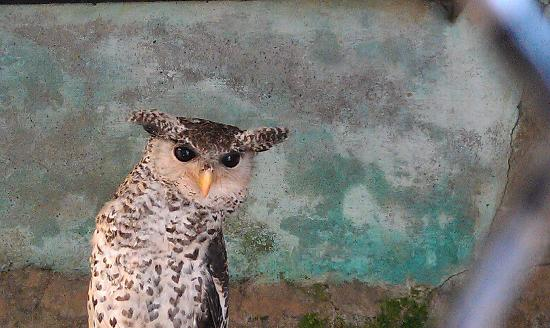 High Altitude Zoo: Look in the eyes of owl