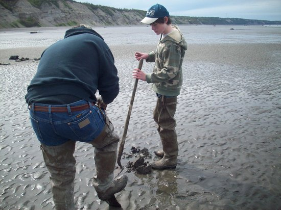 Kenai Fjords National Park, AK: Digging for razor clams